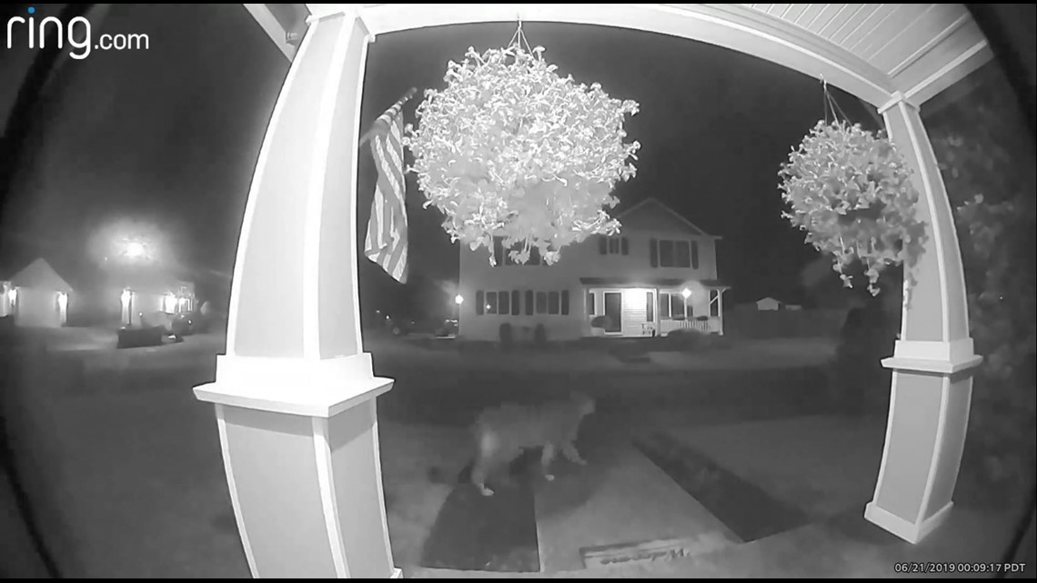 Sandy warns residents after another cougar sighting reported