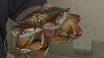 Grant's Getaways: Winter Crabbing