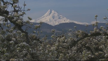 Grant's Getaways: Carpet of spring snow