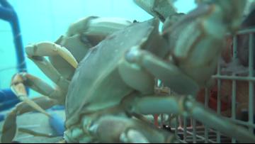 Grant's Getaways: Crabbing in Astoria