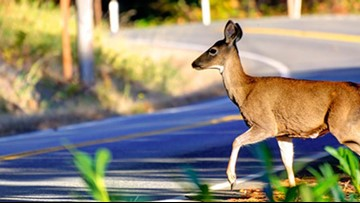 Eat roadkill law in Oregon tops Cycle World list of weird U.S. motoring laws