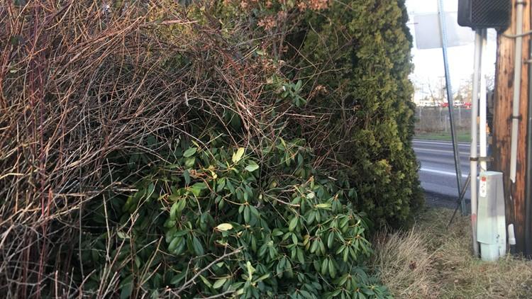 Vegetation on private property