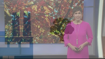 Brenda Braxton explains why leaves change colors in the fall