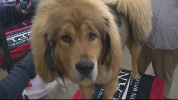 Out and About: Rose City Dog Show