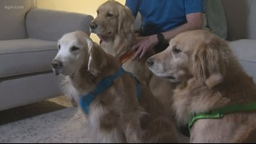 Golden retrievers give back to community