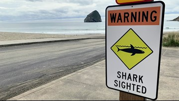 'It pulled me straight down like a plunger': Surfer says shark bit his board off Oregon Coast