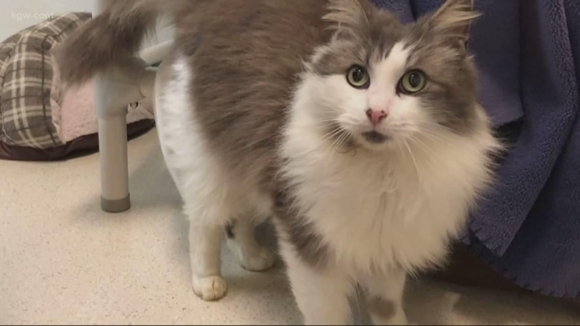 Virtual cat adoptions during pandemic