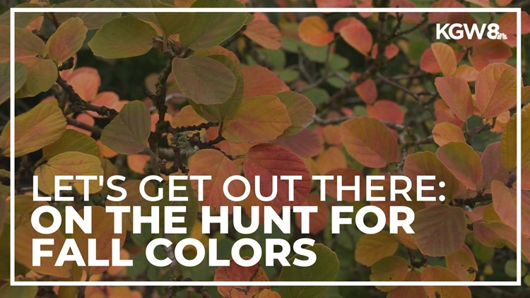 Let's Get Out There: On the hunt for fall colors