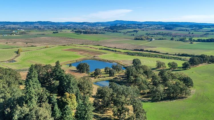 CJ McCollum buys 318-acre vineyard property in Willamette Valley