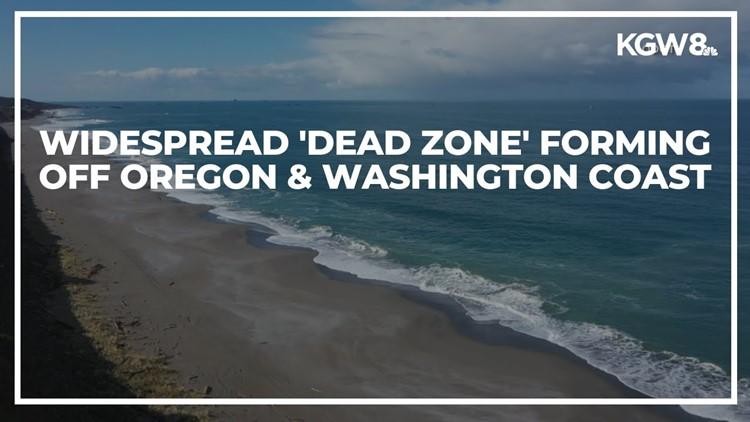 Massive dead zone forming off Oregon and Washington coast