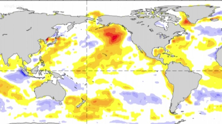 New marine heat wave known as 'the Blob' spotted again off the West Coast