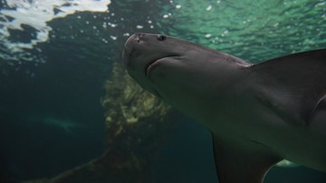 Shark bites diver at Point Defiance Zoo