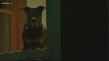 Rescue dog chases burglar out of Seattle home