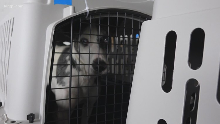 More than 600 dogs and cats flown from Hawaii to Seattle to find new homes