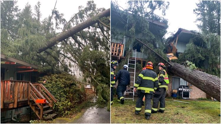 Man critically injured after tree falls on apartments in Renton, Washington