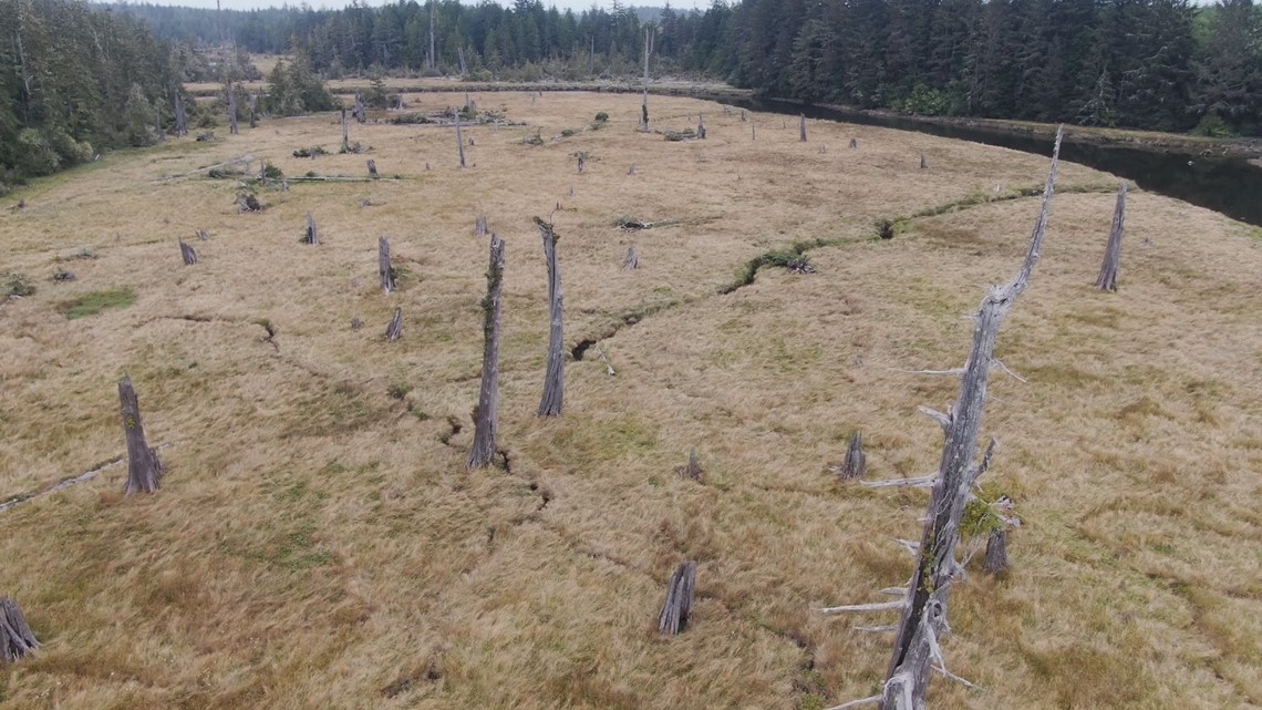 Ghost forest reveals clues to the Cascadia Subduction Zone's last earthquake