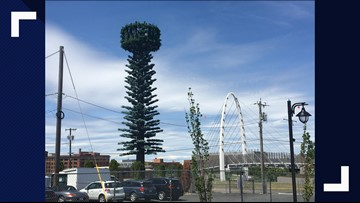 Spokane cell towers disguised as evergreen trees, but with goofy tops