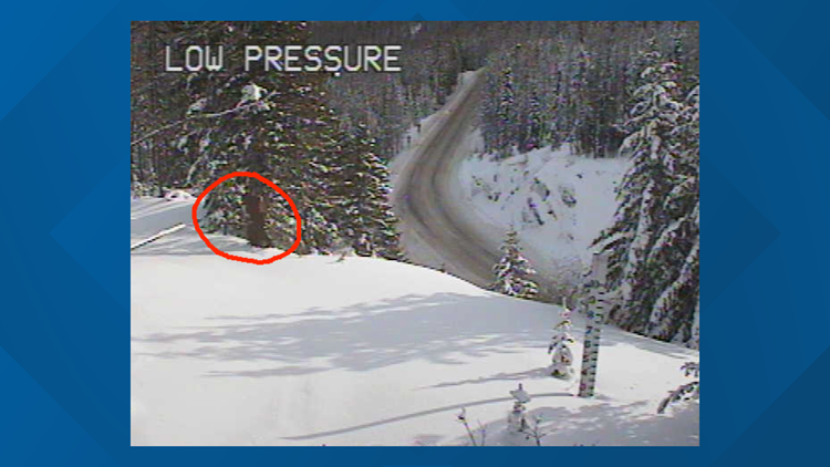 Another Sasquatch sighting? WSDOT says creature spotted near Snoqualmie Pass