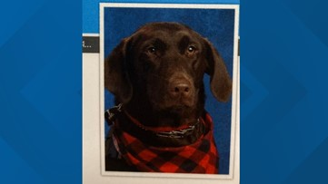 Service dog poses for first school picture