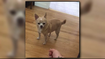 Dog's owner says a dentist killed her dog. Now he's facing backlash online