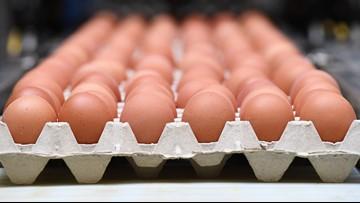 Salmonella outbreak linked to recalled eggs sickens dozens