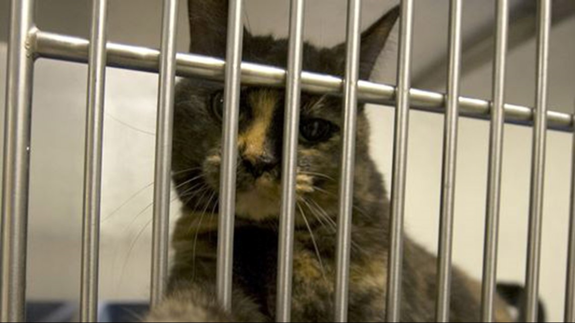Cats in dire need after shelters pleas for food unanswered