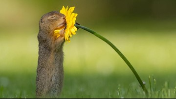 Photographer captures moment a squirrel stopped to smell a flower